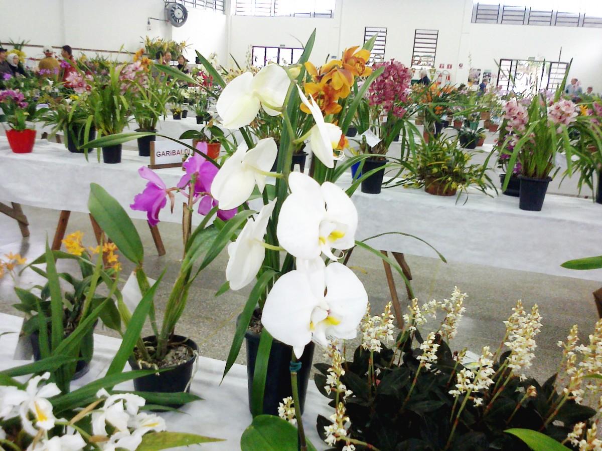 21ª Exposição de Regional de Orquídeas