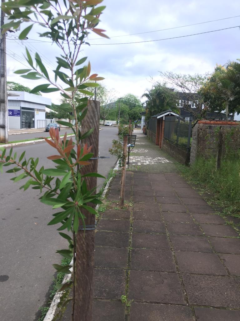 A arborização urbana traz diversos benefícios para os munícipes, além de embelezar a cidade.