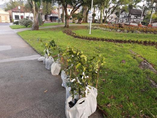 Secretaria da Agricultura e Emater realizaram a entrega de mudas de árvores