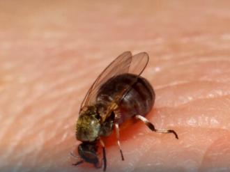 Município aplica inseticida para combater borrachudos